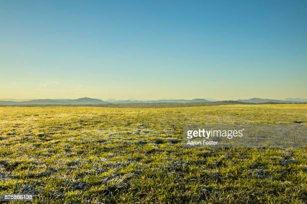 grass hilltop - clear sky stock pictures, royalty-free photos & images
