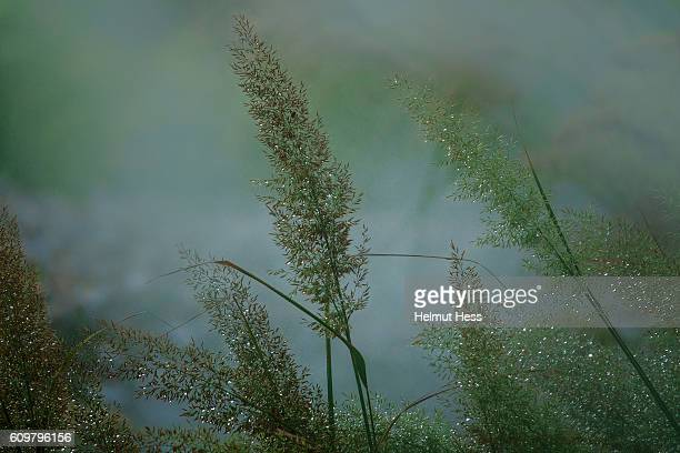 grass in fog