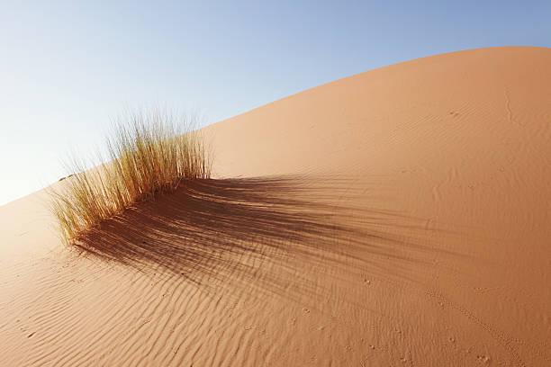 Grass in Sahara Desert, Merzouga, Morocco