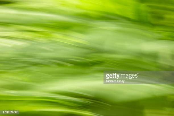 grass in summer meadow - richard drury stock pictures, royalty-free photos & images