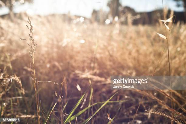 Grass in the afternoon sun