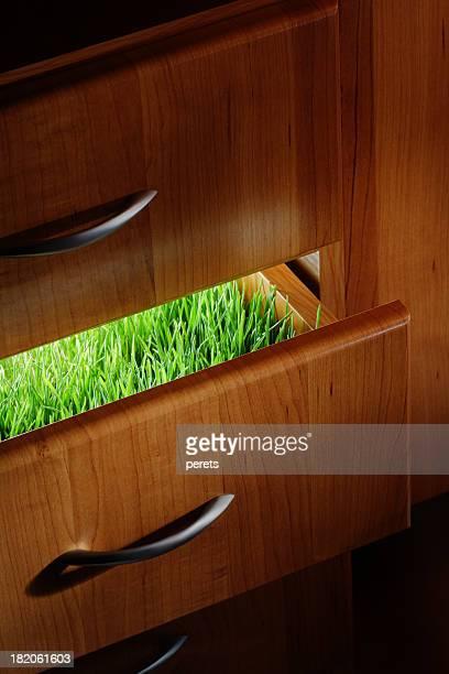 Herbe dans le tiroir
