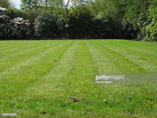 grass lawn mowed into lines - pelouse photos et images de collection