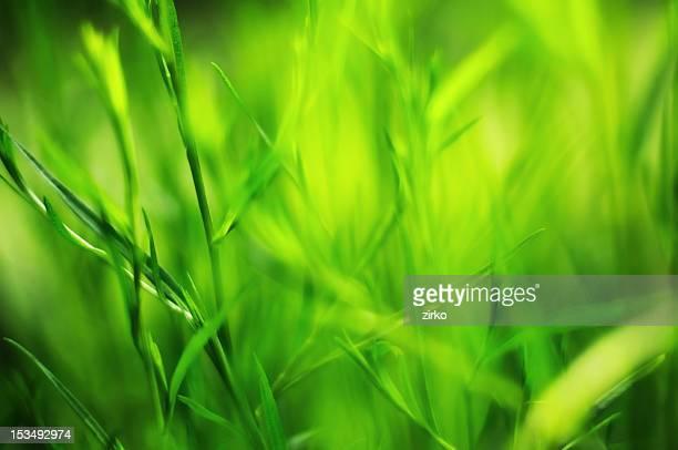 Grass macro shot
