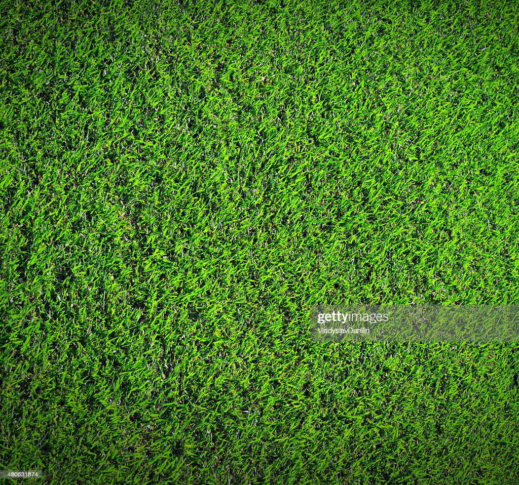 grass nature : Stock Photo