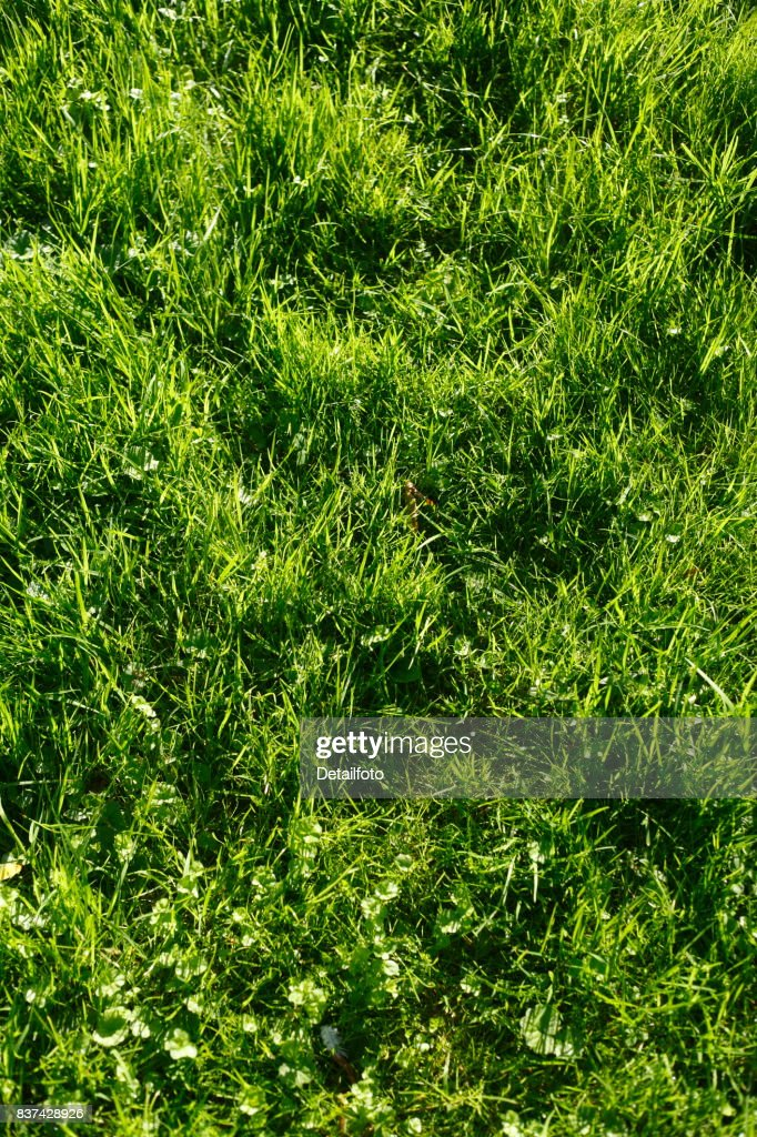 Gras Auf Einer Wiese Rasen Rasenflache Stock Photo Getty Images