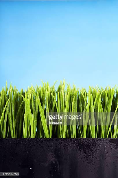 Grass on blue