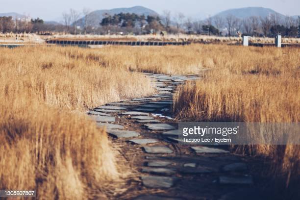 grass on field by lake against sky - south korea stock pictures, royalty-free photos & images
