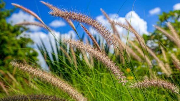 Grass on Mauritius Island
