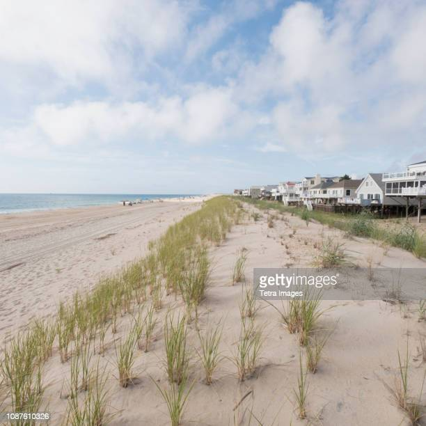 grass on sand dunes at bethany beach in delaware - bethany beach stock photos and pictures