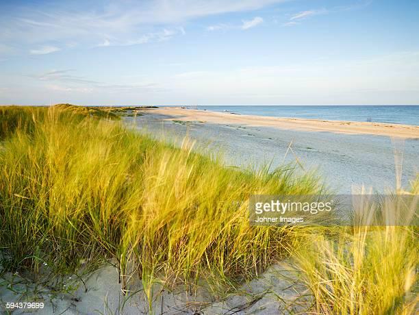 Grass on sand dunes