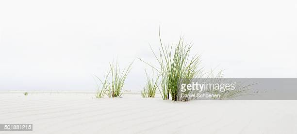 Grass on the beach, panoramic view, Amrum, North Frisian Islands, Schleswig-Holstein, Germany, Europe