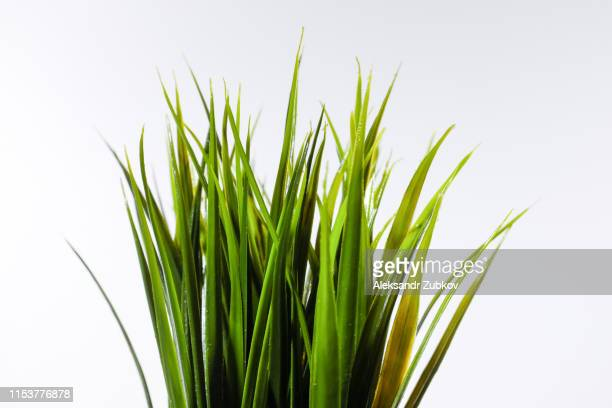 grass on white backgroundbunch of green grass isolated on white background close-up - remote location stock pictures, royalty-free photos & images