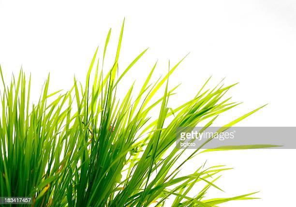 Grass on White