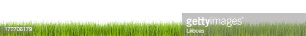 grass panorama (xxl) - gras stock pictures, royalty-free photos & images