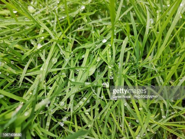 grass - fraîcheur photos et images de collection
