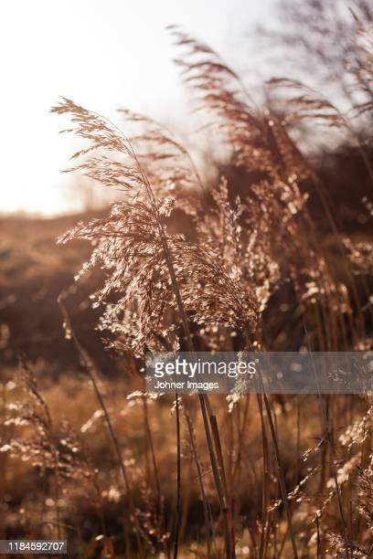 grass - gras stock pictures, royalty-free photos & images
