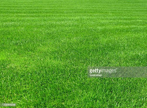 grass - good condition stock pictures, royalty-free photos & images