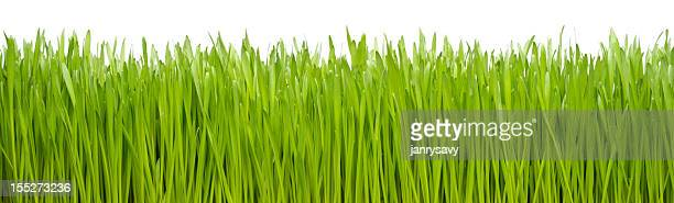 grass - blade of grass stock pictures, royalty-free photos & images