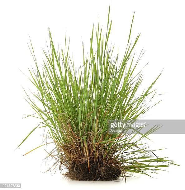 grass - bush stock pictures, royalty-free photos & images