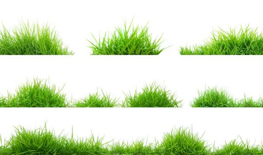 grass 178068975