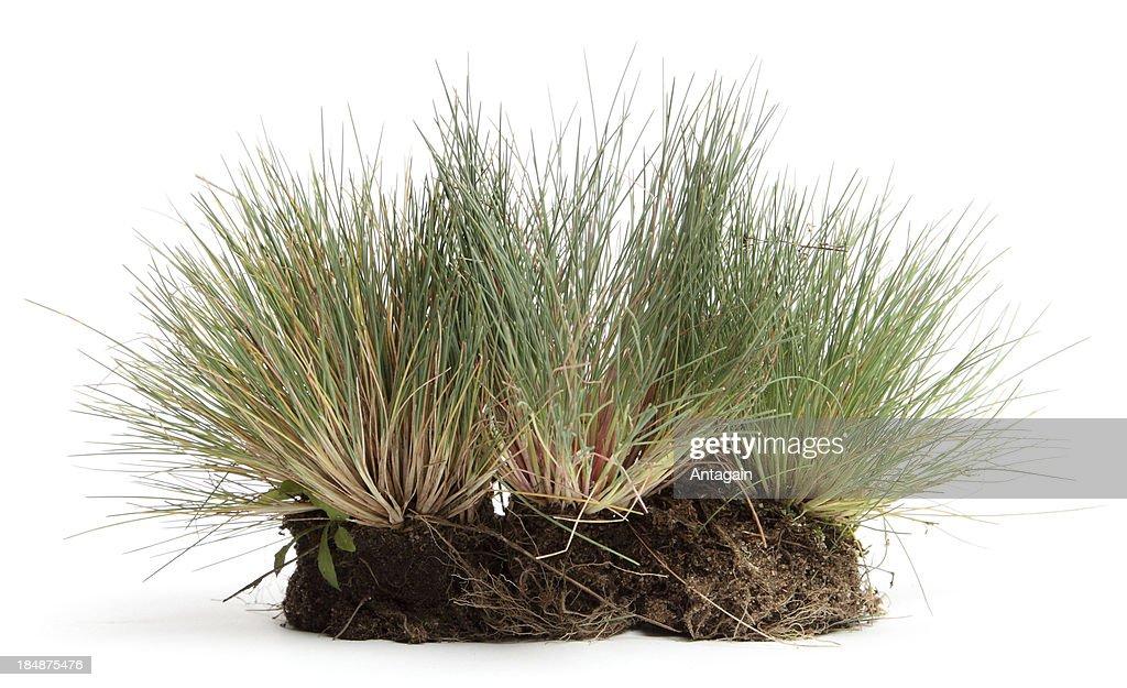 Gras : Stock-Foto