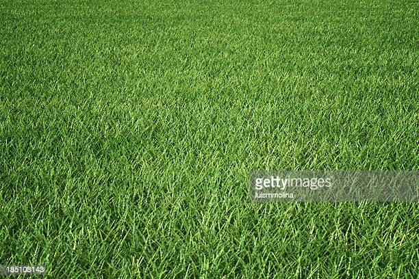 grass - golf background stock photos and pictures