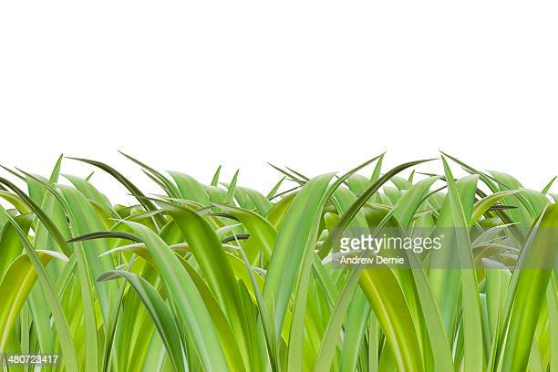 grass - andrew dernie stock pictures, royalty-free photos & images