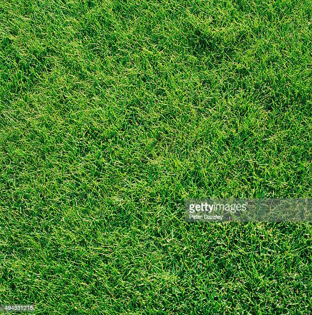 grass - grass picture stock pictures, royalty-free photos & images