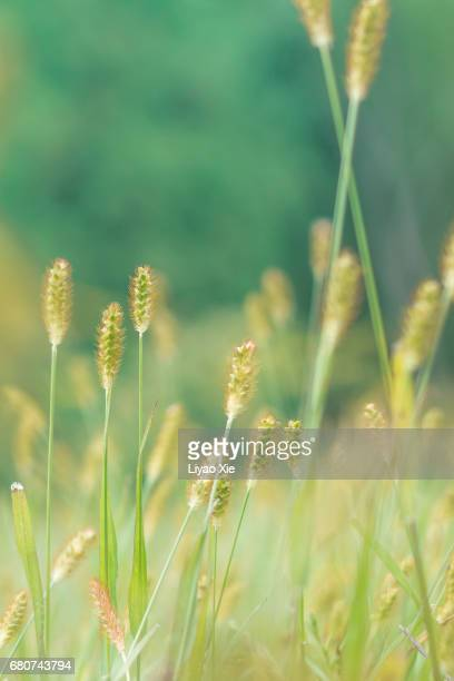 grass - liyao xie stock pictures, royalty-free photos & images