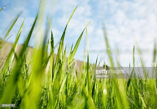 grass - gras stock-fotos und bilder