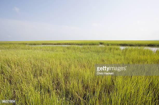 grass - sumpf stock-fotos und bilder