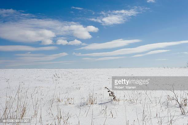 Grass poking through snow field