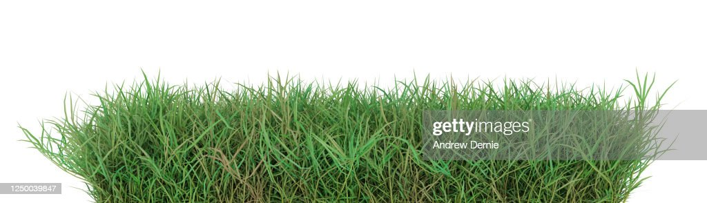 Grass, Quark grass viewed from the side, isolated on a white background 3D Render : Stock Photo