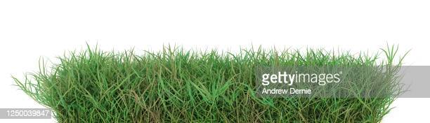 grass, quark grass viewed from the side, isolated on a white background 3d render - andrew dernie stock pictures, royalty-free photos & images