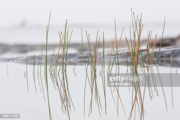 Grass reflecting in water