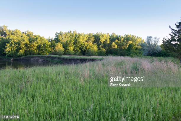 Grass, River, and Forest