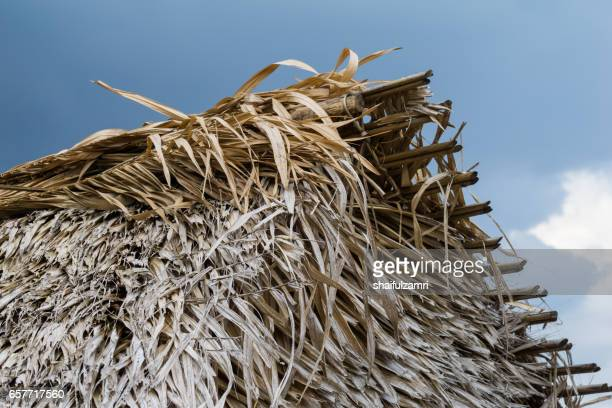 grass roof is a common view for traditional house in royal belum rainforest park, perak, malaysia - shaifulzamri stock pictures, royalty-free photos & images