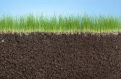 grass roots,