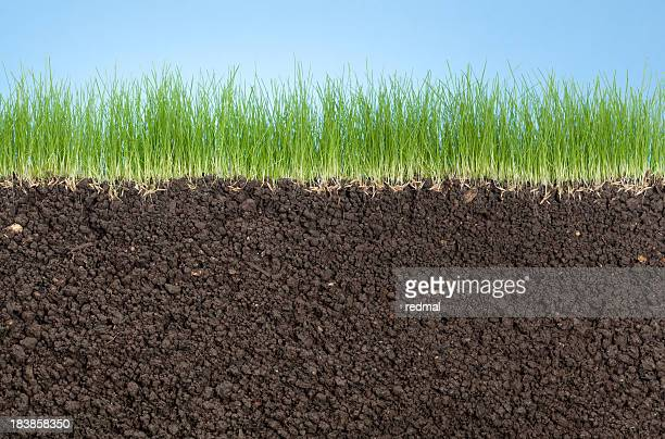 grass roots, - cross section stock pictures, royalty-free photos & images