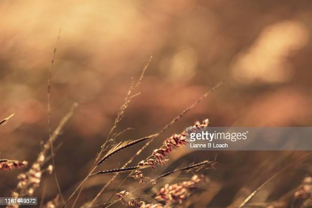 grass seed - lianne loach stock pictures, royalty-free photos & images
