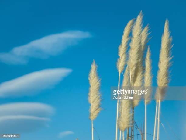 grass & sky - pampa stock-fotos und bilder