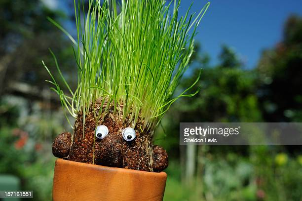 "grass sprouting forms ""hair"" on nylon mesh ""head"" - by sheldon levis stock pictures, royalty-free photos & images"