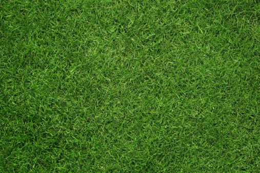 Grass texture 179675772