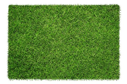 Grass texture 610149220