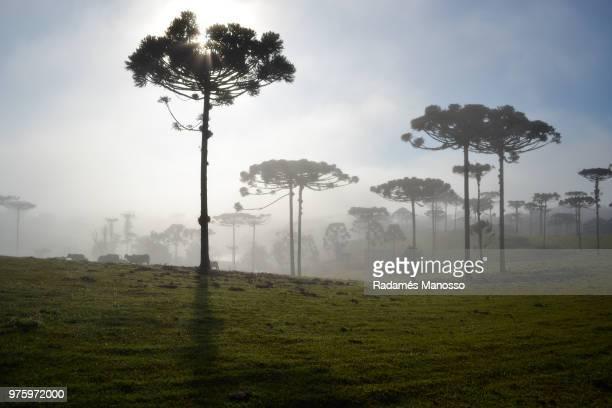 Grass, trees and fog, Guaratuba, Paran, Brazil