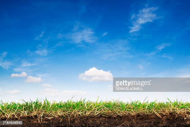 grass turf and sky - grass stock pictures, royalty-free photos & images