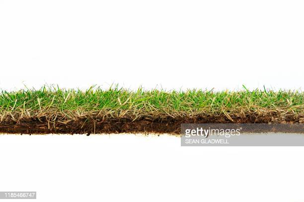 grass turf side view - cross section stock pictures, royalty-free photos & images