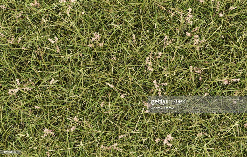 Grass uncultivated viewed from the above, full frame : Stock Photo