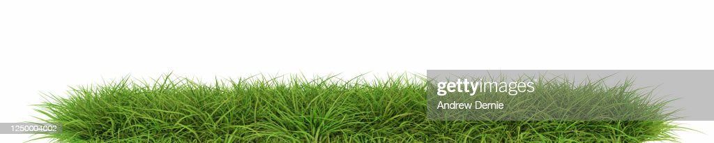 Grass viewed from the side, isolated on a white background 3D Render : Stock Photo